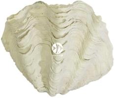 Back To Nature Tridacna Clam S (03000188) - Ozdobna imitacja muszli do akwarium