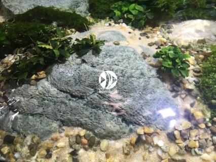 Back To Nature River Stone C - sinking (03010212) - Imitacja kamienia rzecznego tonąca do akwarium